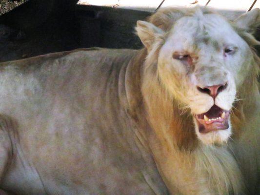 www.morrisophotography.co.uk/lionstigersandbears