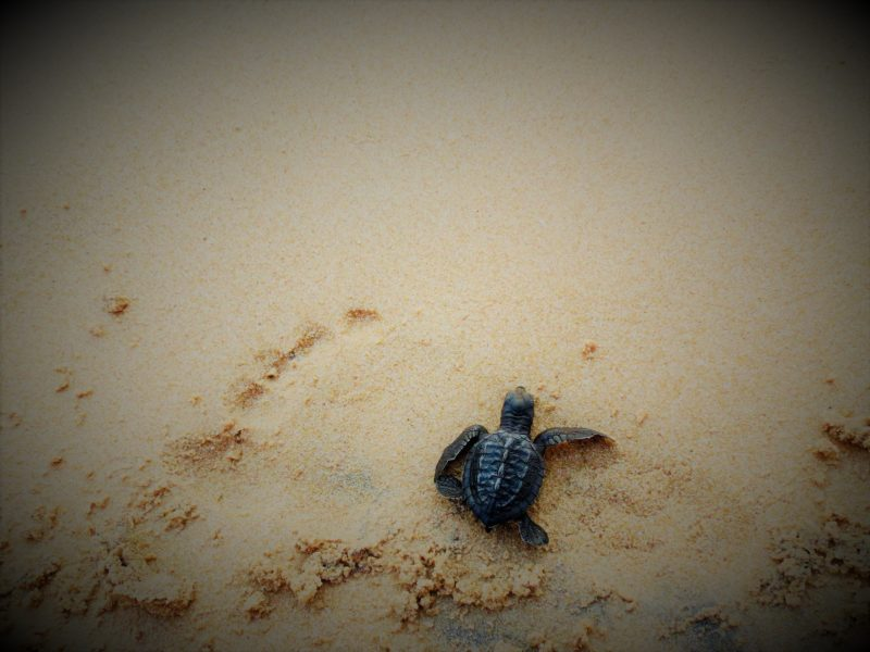 Animal Photography in Sri Lanka